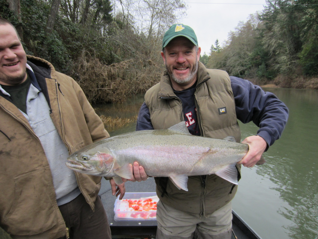 Cow Creek Steelhead